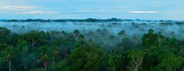 rainforestsmall